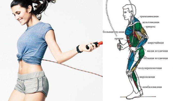 какие мышцы работают при прыжках